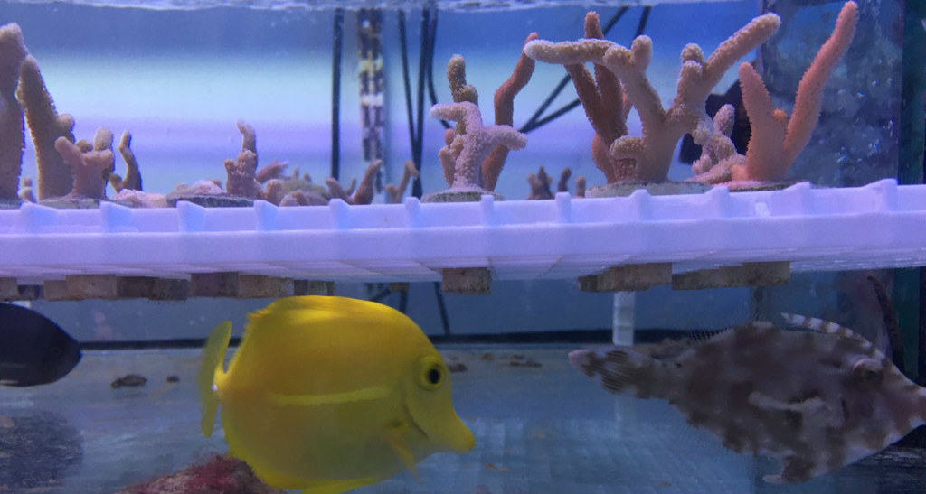 coral biome aquarium