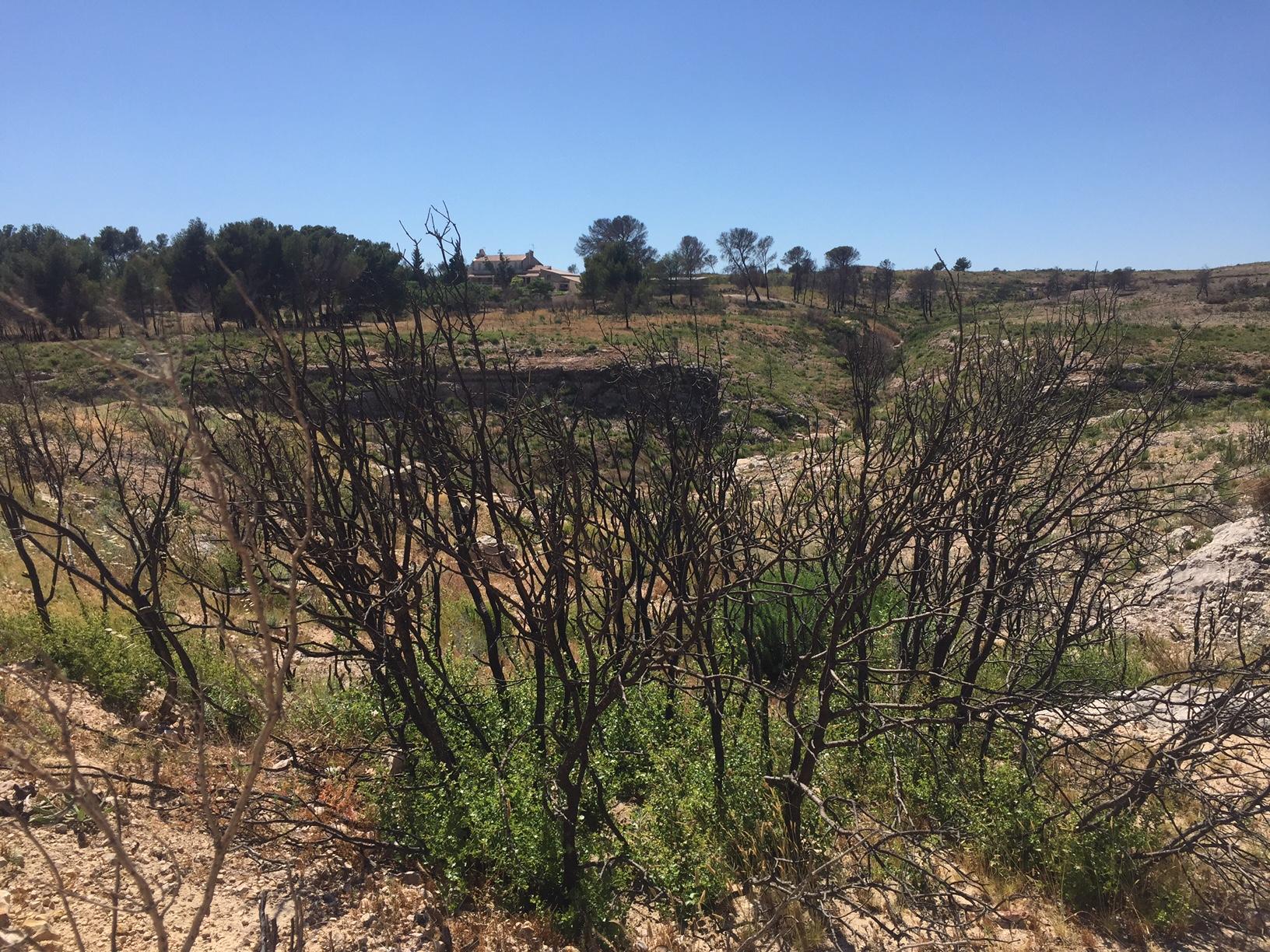 Feux de forêt Vitrolles 1 an après