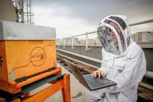 Des ruches connectées pour surveiller la santé de notre environnement ©JM Huron