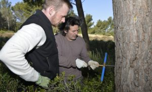 [Environnement] Pollution sur la zone industrielle de Fos : les arbres ont de la mémoire