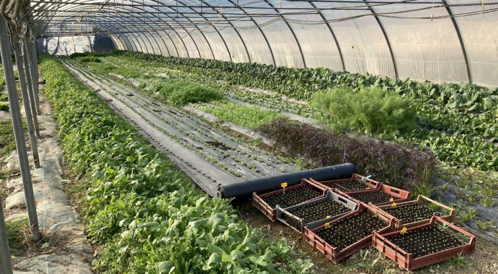 Terre de Mars cultive une quarantaine de variétés de légumes dans sa ferme de Sainte-Marthe Crédit RM)